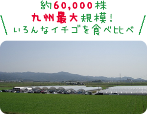 約60,000株九州最大規模!